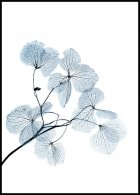 Blue Leaves Plakat