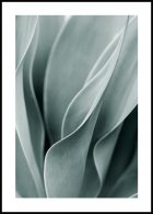 Agave leaves Plakat