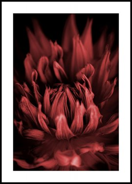 Red Flower Plakat
