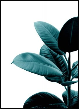 Green rubber plant Plakat