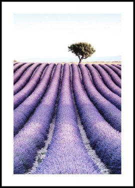 Lavender field tree Plakat