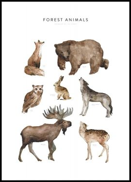 Forest Animals Plakat