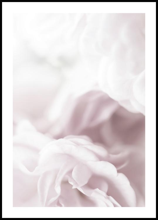 Soft Rose Plakat