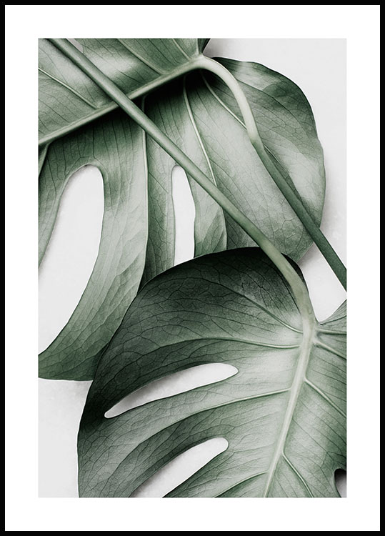 Green Monstera Plakat