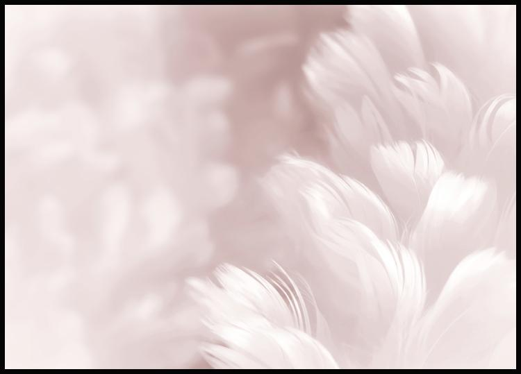 Pink Feathers Plakat